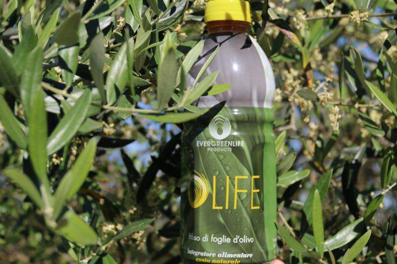 domande risposte sullinfuso di foglie di olivo